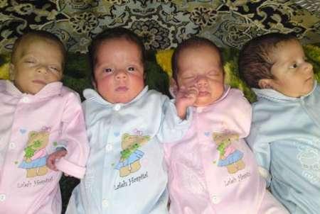 چهارقلوهای چهارمحال و بختیاری سالم متولد شدند