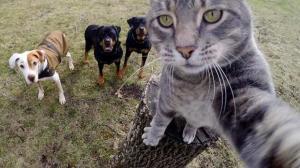 این گربه عکس سلفی را از شما هم بهتر میگیرد