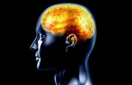 این سلول های مغزی عامل ایجاد اشتها هستند