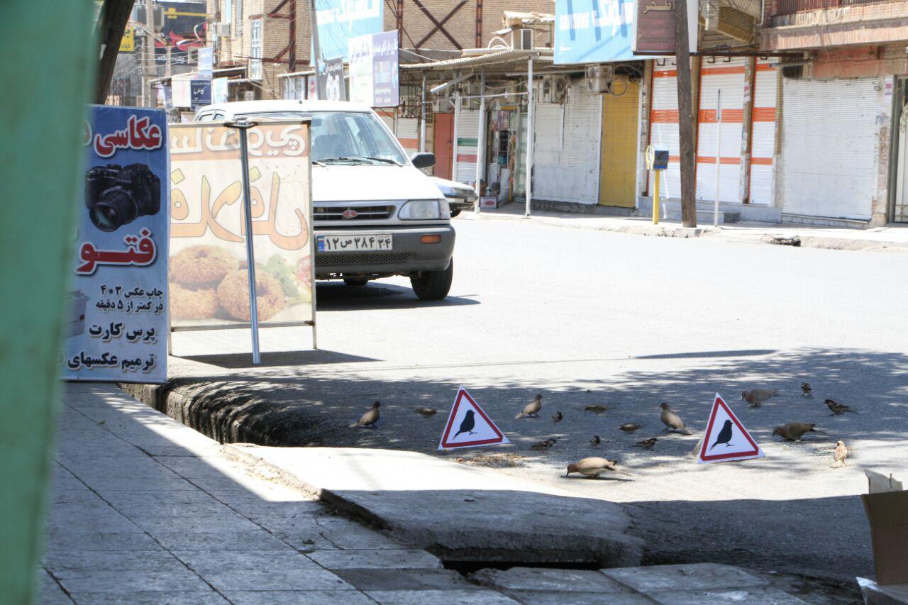 کلوچه فروش اهوازی حامی پرندگان (+عکس)