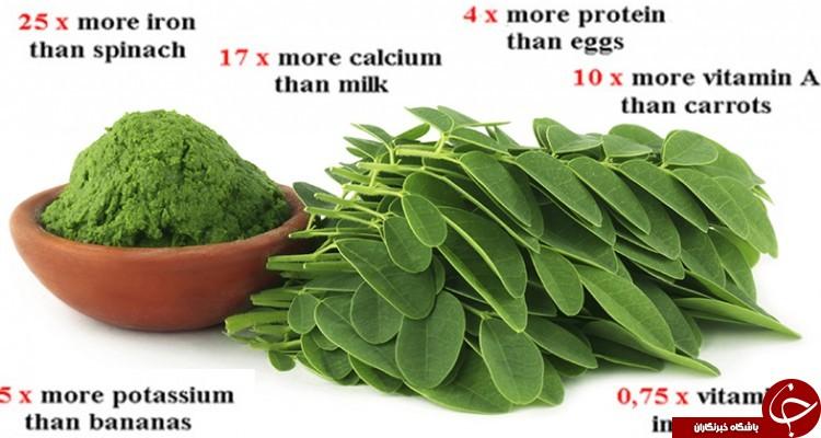 گیاه عجیبی که قاتل 4 نوع سرطان است