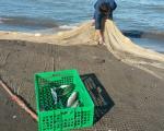 ماهیگیران زحمت کش