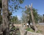 اختلاف نظر شورای شهر و دانشگاه صنعتی همدان درباره درختان  این واحد علمی